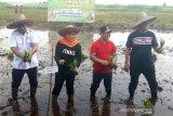 Aktivitas pertanian di lahan gambut, diyakini meminimalkan karhutla di Palangka Raya