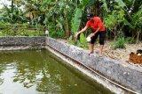 Kelompok budidaya ikan Cilibang terima bantuan bibit Gurami