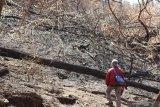 Wisatawan melihat sisa kebakaran di Gunung Ijen, Banyuwangi, Jawa Timur, Kamis (7/11/2019). Pendakian Gunung Ijen yang sebelumnya ditutup selama 18 hari akibat kebakaran hutan, mulai tanggal (7/11) telah resmi dibuka. Antara Jatim/Budi Candra Setya/zk.