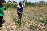 Petani Kediri berhasil buat alat penebar pupuk
