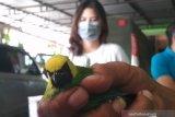 Ribuan burung tanpa dokumen diamankan tim gabungan BKSDA