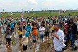 Pemkab Kubu Raya gelar kembali Gerakan Wisata Tanam Padi Milenial