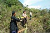 Diduga akibat puntung rokok sekitar delapan hektare hutan di Sukabumi terbakar