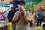 Melihat Kontes Kucing di Pekanbaru