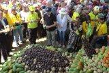 Kadis Pertanian Lamtim: Festival Buah Nusantara agar masyarakat gemar makan buah-buahan