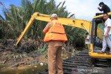 351 bangkai babi dikubur massal di lubang besar yang dikeruk pakai