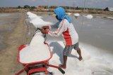 Petani memanen garam di Pamekasan, Jawa Timur, Selasa (12/11/2019). Badan Pengkajian dan Penerapan Teknologi (BPPT) bekerja sama dengan PT Garam membangun proyek percontohan produksi garam industri dengan skala produksi 40.000 ton per tahun. Antara Jatim/Saiful Bahri/zk