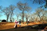 Pengunjung menikmati panorama pantai wisata Jumiang di Desa Tanjung, Pamekasan, Jawa Timur, Selasa (12/11/2019). Destinasi wisata yang selalu ramai pengunjung terutama saat musim libur itu, terus dibenahi dan diharapkan dapat meningkatkan pendapatan pemkab dan kesejahteraan masarakat setempat. Antara Jatim/Saiful Bahri/zk