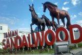 Pemkab Sumba Timur membenahi fasilitas objek wisata Taman Matawai