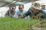 INOVASI BUDIDAYA BAWANG MERAH. Dirjen Hortikultura Kementerian Pertanian Prihasto Setyanto (kedua kanan) bersama Managing Director PT East West Seed Indonesia (Ewindo) Glenn Pardede (kiri) memeriksa hasil penyemaian benih bawang di Purwakarta, Jawa Barat (14/11/2019). Kementerian Pertanian mendorong petani untuk mengembangkan budidaya bawang merah menggunakan biji karena hemat biaya, yaitu Rp 10 juta/ha dibanding menggunakan umbi sebesar Rp 45 juta/ha, produksinya lebih besar dan mengurangi impor bibit/umbi.. ANTARA FOTO/M Ibnu Chazar/agr