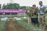 Dirjen Hortikultura Kementerian Pertanian Prihasto Setyanto (kedua kiri) bersama Managing Director PT East West Seed Indonesia (Ewindo) Glenn Pardede (kiri) memanen bawang merah di sela acara edukasi budidaya bawang merah menggunakan biji di Purwakarta, Jawa Barat, Kamis (14/11/2019). Kementerian Pertanian mendorong petani untuk mengembangkan budidaya bawang merah menggunakan biji karena hemat biaya, yaitu Rp 10 juta/ha dibanding menggunakan umbi sebesar Rp 45 juta/ha, produksinya lebih besar dan mengurangi impor bibit/umbi.. ANTARA FOTO/M Ibnu Chazar/agr