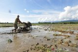 Petani Parigi Moutong mulai tanam padi di sawah yang baru dicetak
