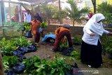 BBKSDA Riau targetkan generasi milenial untuk Gerakan Cinta Bumi, begini penjelasannya