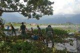 Pemkab Agam sebut 20 ton ecek gondok dikeluarkan dari Danau Maninjau