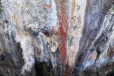 Peneliti temukan lukisan prasejarah di Situs Ambesibui Teluk Wondama