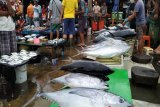 DKP dan BLH Jayapura periksa ikan untuk pastikan pencemaran merkuri