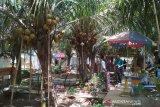 Wisatawan minati kampung kelapa kopyor di Pati