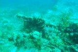 Bangkai pesawat Jepang ditemukan di Teluk Wondama Papua Barat