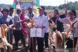 Pemkab Gumas sediakan  Rp300 juta untuk program tanam jagung
