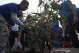Ruang terbuka hijau Kota Cirebon baru 10 persen di bawah target pemerintah