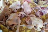 Harga ayam ras potong di Bandarlampung naik