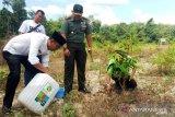 Suburkan tanaman bekas tambang di Dharmasraya, Kodim beri Bios 44