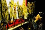 Pementasan wayang kulit dengan Lakon Dewa Ruci oleh dalang Urban Wahlstedt
