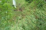 Polisi menemukan tujuh hektare ladang ganja di Pegunungan Tor Sihite