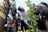 Antusiasme masyarakat Ohoi Ngayub kembangkan agrowisata