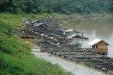 Warga memberi makan ikan yang dibudidayakan menggunakan keramba apung di Sungai Batanghari, Jambi Luar Kota, Muarojambi, Jambi, Jumat (22/11/2019). Muarojambi yang sebagian wilayahnya dialiri Sungai Batanghari merupakan sentra budi daya ikan air tawar Provinsi Jambi dengan hasil panen mencapai lebih dari 20 ribu ton per tahun yang dipasarkan ke sejumlah daerah. ANTARA FOTO/Wahdi Septiawan/pras.
