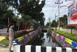 Viral... Ada parit warna-warni di Pekanbaru, 30 koi disebar