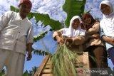 Kabupaten Sukabumi surplus beras 400 ribu ton