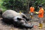 Polisi periksa enam saksi terkait kematian gajah