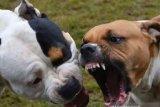 Masyarakat perlu pahami  pola didik hewan piaraan hindari serangan