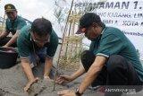 PLN UIW NTB menanam seribu pohon di Lombok