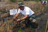 PLN tanam 10.000 mangrove di Pantai Mangunharjo
