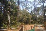 Aceh akan bangun Suaka Rhino Sumatera di Aceh Timur