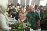 Kaltim ekspor pisang asal Kutai Timur ke Malaysia