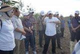 PLTB di Pulau Timor akani dibangun pada 2022