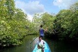 Kawasan ekowisata bakau di Kabupaten Wakatobi, sarana rekreasi dan edukasi