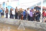 Menteri Kelautan dan Perikanan targetkan produksi udang 5 ton perhektare