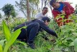 Komunitas antinarkoba Kabupaten Batang tanam 2.400 pohon
