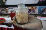 Polisi menunjukkan barang bukti saat ungkap kasus perdagangan benih Lobster ilegal di Polda Jawa Timur, Surabaya, Jawa Timur, Senin (2/12/2019). Unit IV Subdit IV Tipidter Ditreskrimsus Polda Jawa Timur menangkap DPK, AHP dan NW atas kasus dugaan menyelundupkan benih Lobster yang rencananya akan dijual ke luar negeri. Sejumlah barang bukti diamankan dalam kasus tersebut salah satu diantaranya 7.300 ekor benih lobster jenis Pasir dan 2.978 ekor benih lobster jenis Mutiara. Antara Jatim/Didik/Zk