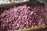 Jelang akhir tahun harga bawang merah di Bandarlampung stabil