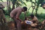 Pemkot Payakumbuh salurkan bibit aren untuk 10 kelompok tani Panjang Dalam