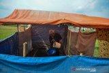 Abah Eni (75) mengambil air dari lubang yang digali secara swadaya di areal persawahan di Kampung Cipanengah, Kelurahan Karikil, Kota Tasikmalaya, Jawa Barat, Selasa (3/12/2019). Warga mendirikan puluhan MCK darurat di sejumlah area persawahan karena meskipun telah memasuki musim penghujan, krisis air masih melanda sejumlah wilayah di Kota Tasikmalaya akibat gunung-gunung yang menjadi serapan air beralih fungsi menjadi kawasan permukiman warga. ANTARA JABAR/Adeng Bustomi/agr