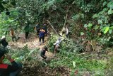 Serangan harimau terhadap tiga warga Sumsel terjadi di habitatnya