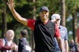 Tiger Woods kembali tolak ikut turnamen golf di  Arab Saudi
