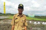 Padi seluas 2.987 hektare di Kulon Progo panen