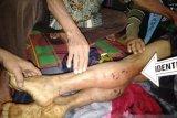 Warga Ogan Komering Ulu diimbau  waspada serangan binatang buas